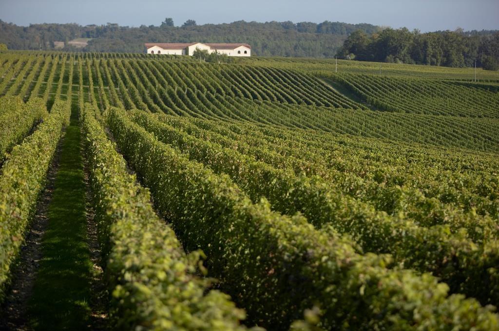 photo-vignoble-chateau-pey-la-tour-bordeaux-chateau-pey-la-tour-fr-0.jpeg